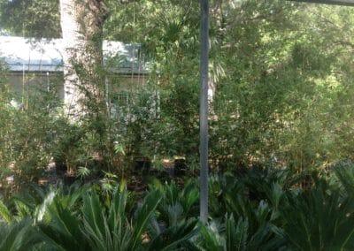 Alphonse-Karr Bamboo-screeb-charleston-kiawah-sc-palm-trees