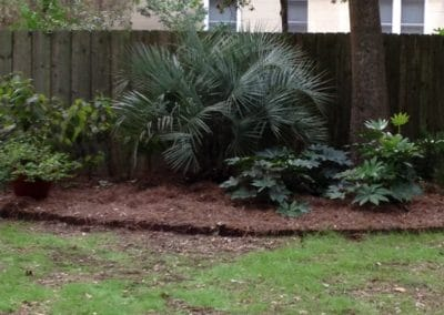 a-pindo-palm-in-a-grouping-charleston-sc